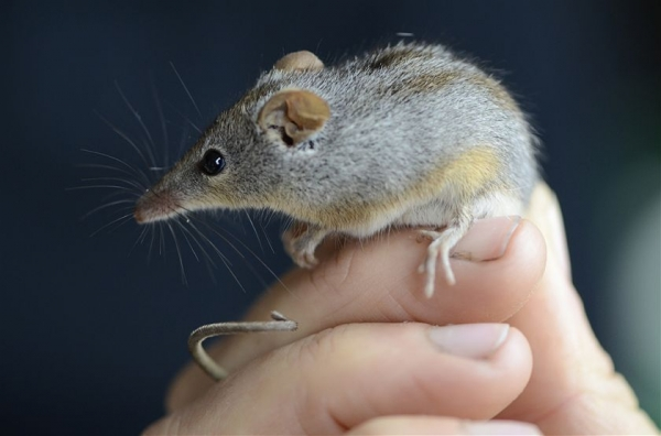 10 baby animals that can almost fit on your fingertip 3