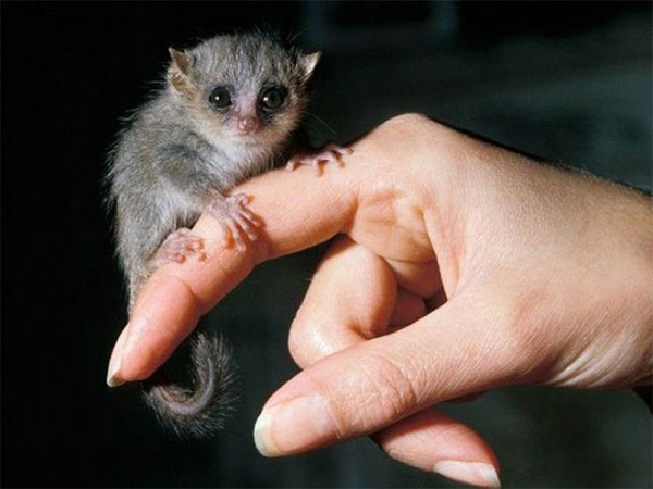 10 baby animals that can almost fit on your fingertip 5