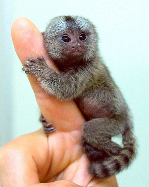 10 baby animals that can almost fit on your fingertip 6