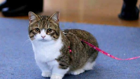 10 munchkin will waddle their way into your heart 1