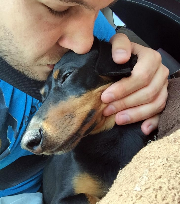 10 reasons why you simply cant resist dachshund 2
