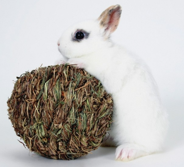 10 things we got wrong about rabbits 11