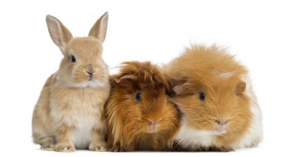 10 things we got wrong about rabbits 2