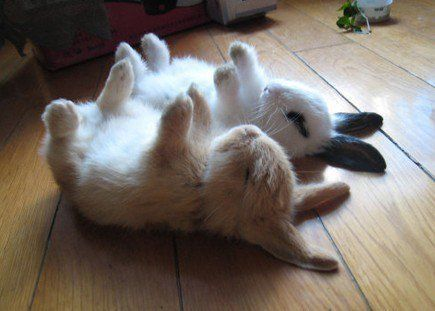 10 things we got wrong about rabbits 5