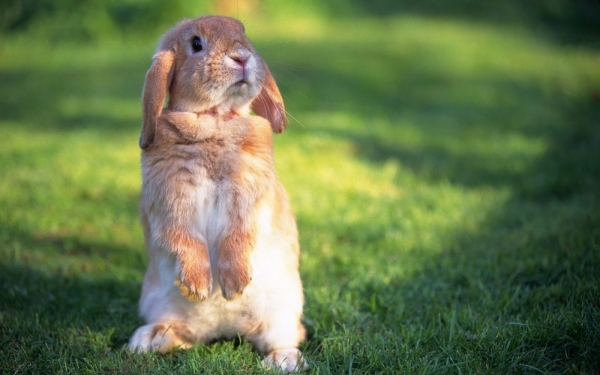 10 things we got wrong about rabbits 6