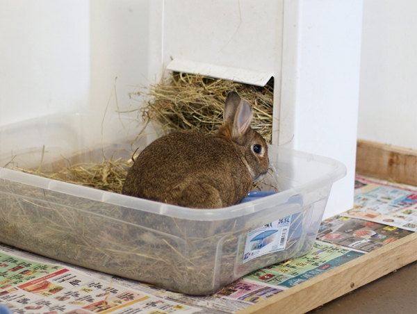 10 things we got wrong about rabbits 7