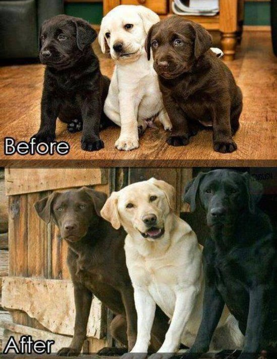 11 adorable pics of dogs growing up 1