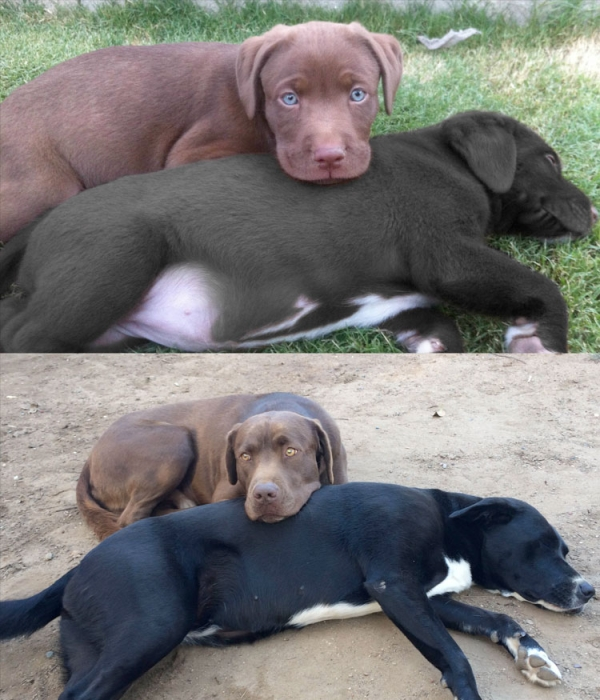 11 adorable pics of dogs growing up 11