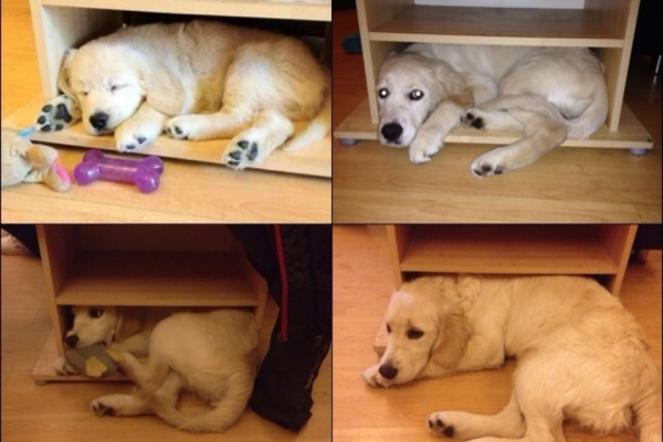 11 adorable pics of dogs growing up 2