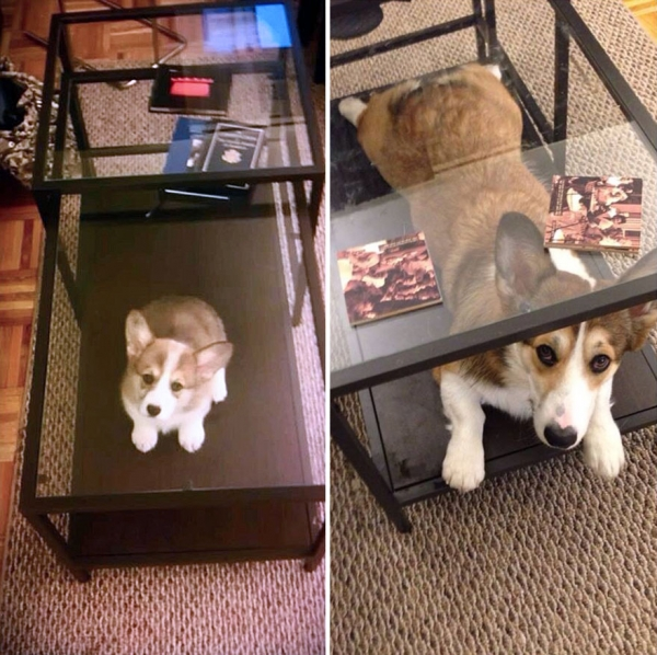 11 adorable pics of dogs growing up 4