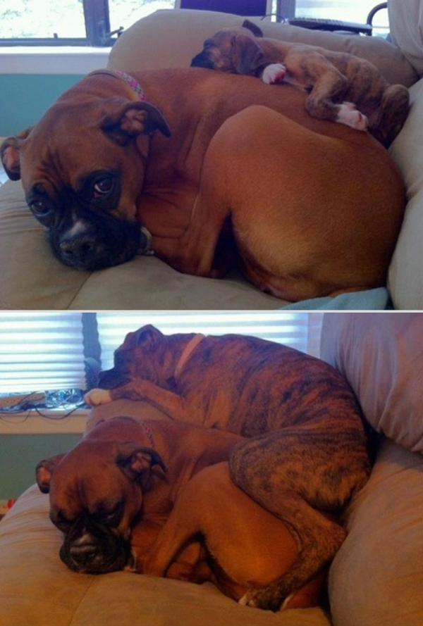 11 adorable pics of dogs growing up 8