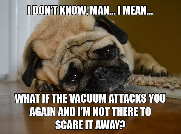 11 introspective and tottaly adorable pugs 2