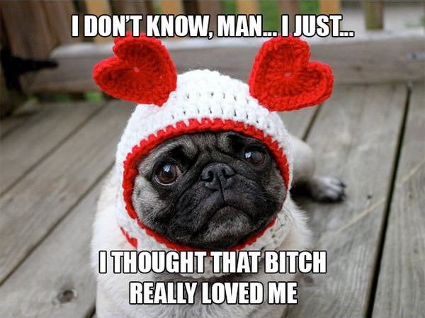 11 introspective and tottaly adorable pugs 4