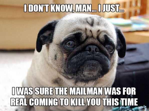 11 introspective and tottaly adorable pugs 7
