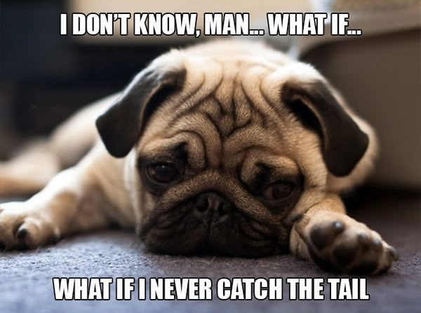 11 introspective and tottaly adorable pugs 9
