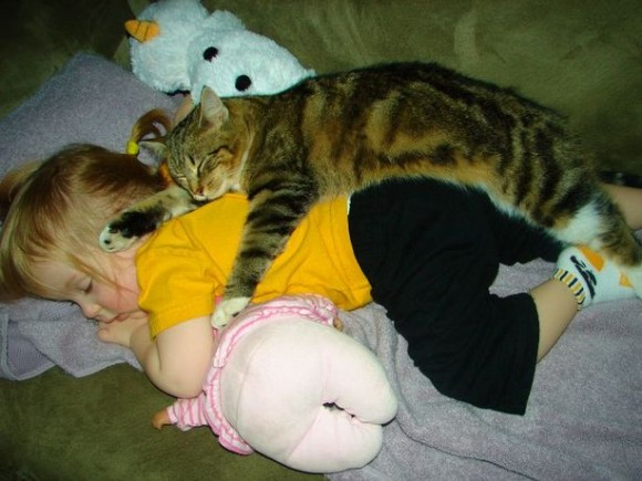 12 cats that really love their humans 1