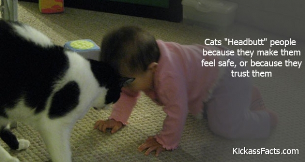 12 cats that really love their humans 10
