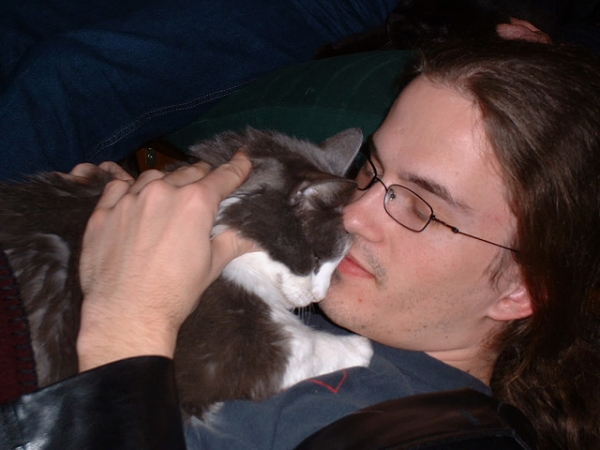 12 cats that really love their humans 11