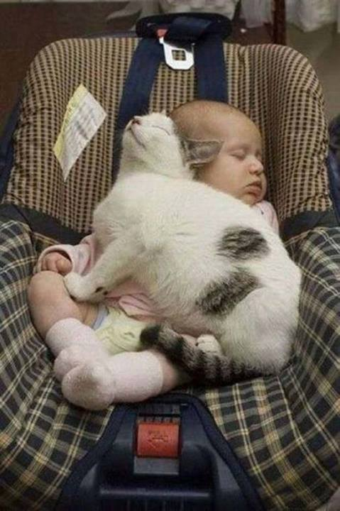 12 cats that really love their humans 4
