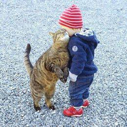 12 cats that really love their humans 6
