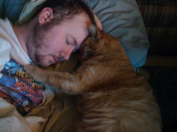 12 cats that really love their humans 7