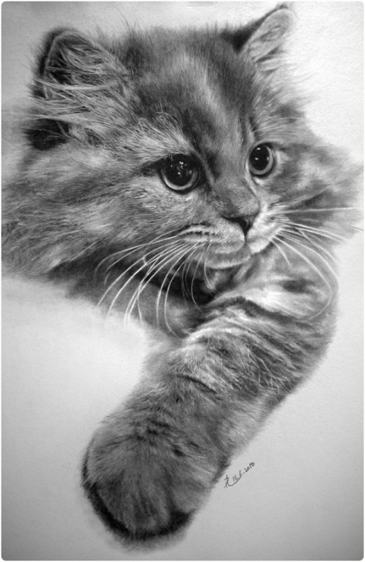 Baby Animal Drawing Realistic