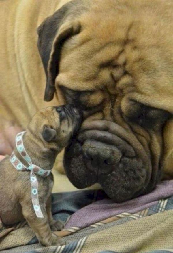 12 most adorable moments of animal families 11