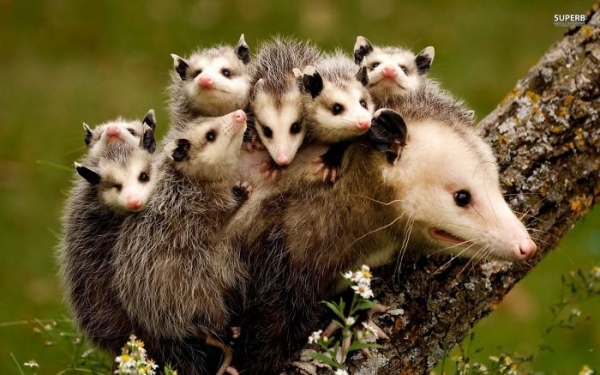 12 most adorable moments of animal families 5