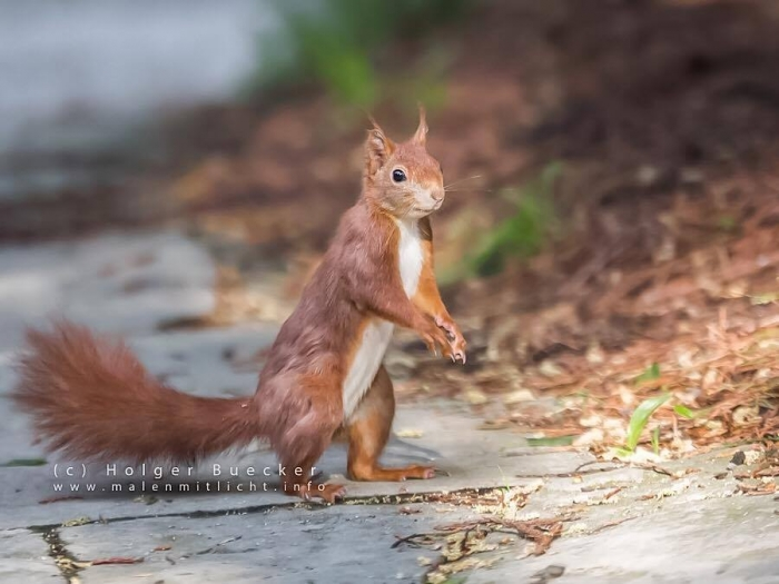 12 photos of fast and cheerful squirrel sue 1