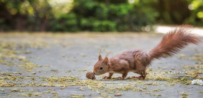 12 photos of fast and cheerful squirrel sue 10