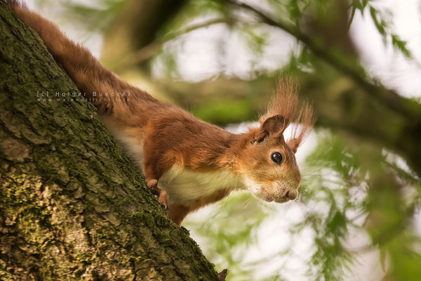 12 photos of fast and cheerful squirrel sue 11