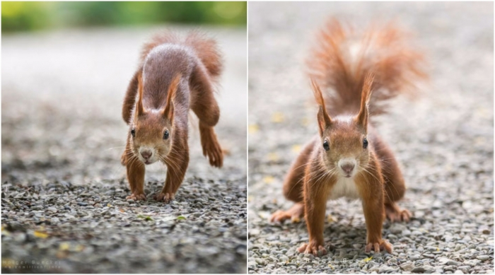 12 photos of fast and cheerful squirrel sue 2