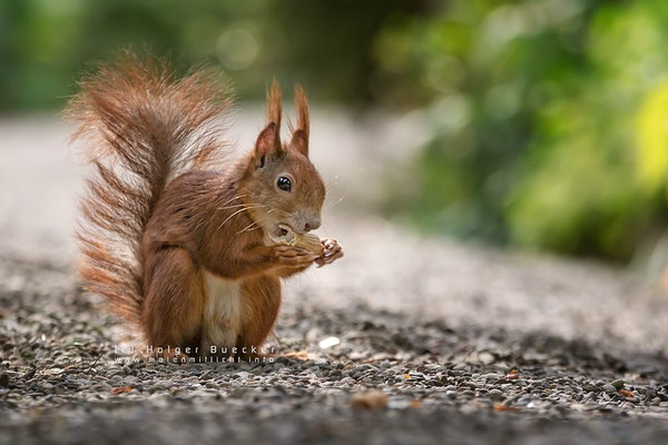 12 photos of fast and cheerful squirrel sue 3