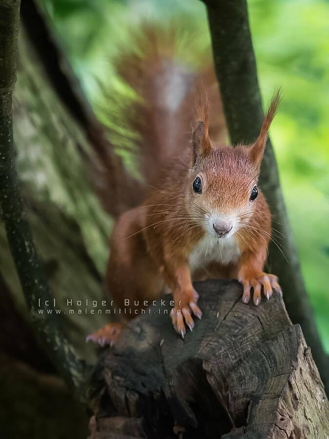 12 photos of fast and cheerful squirrel sue 4