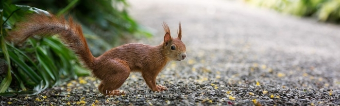 12 photos of fast and cheerful squirrel sue 5