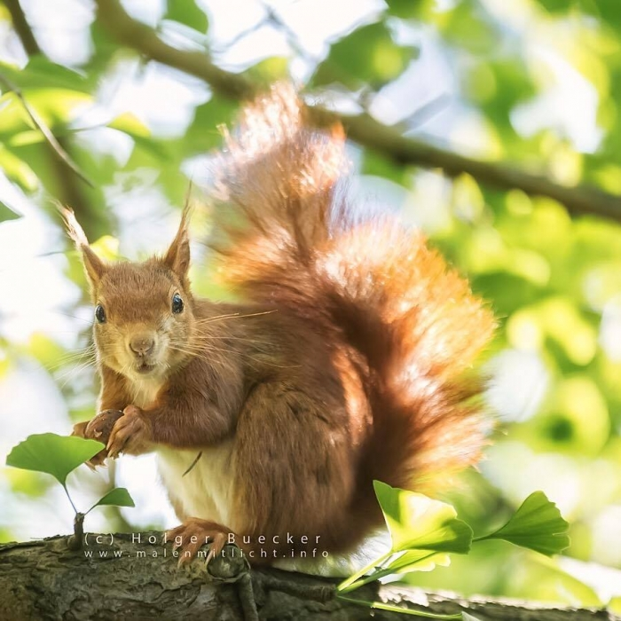 12 photos of fast and cheerful squirrel sue 6