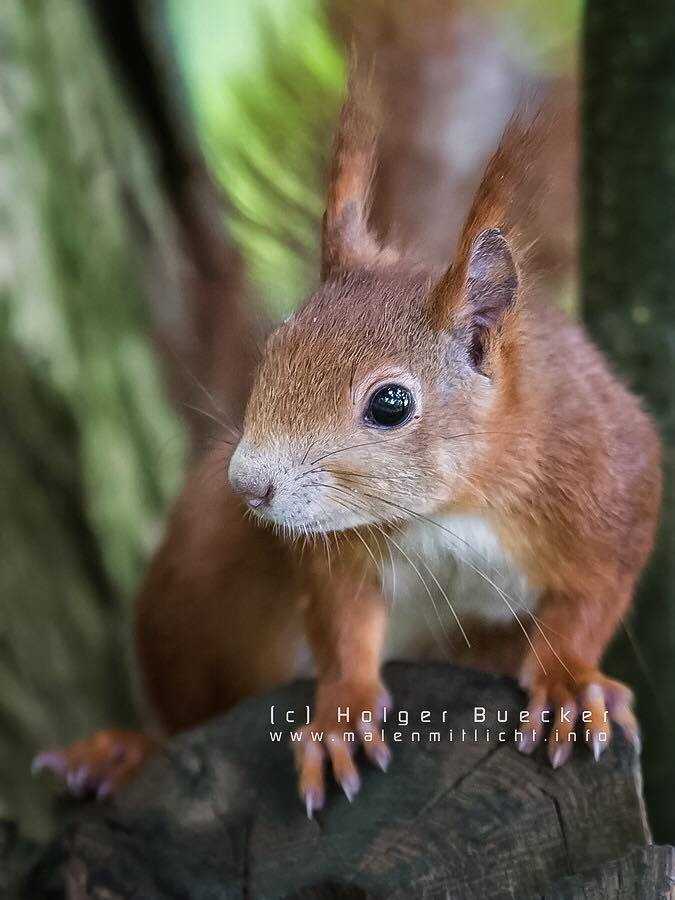 12 photos of fast and cheerful squirrel sue 7