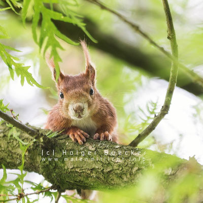 12 photos of fast and cheerful squirrel sue 8