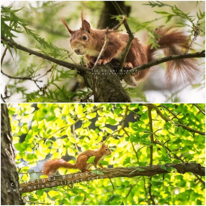 12 photos of fast and cheerful squirrel sue 9