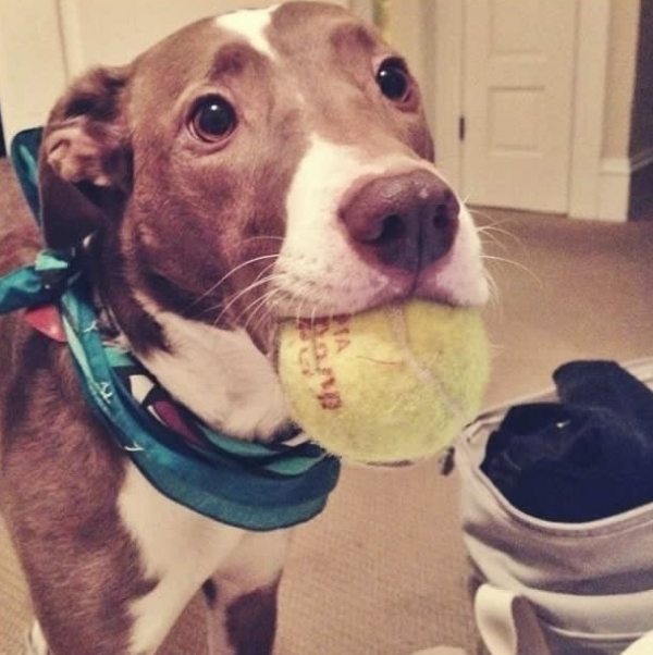 12 reasons why you should get a dog right now 10