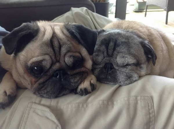 12 reasons why you should get a dog right now 11