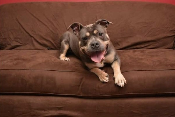 12 reasons why you should get a dog right now 4