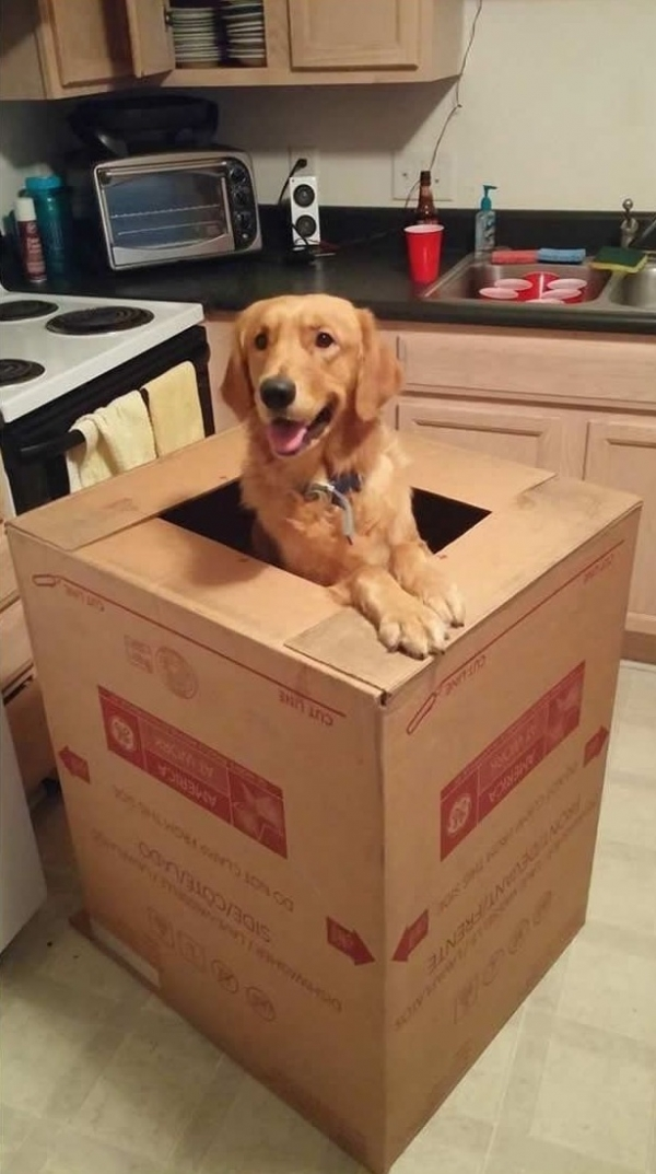 12 reasons why you should get a dog right now 6