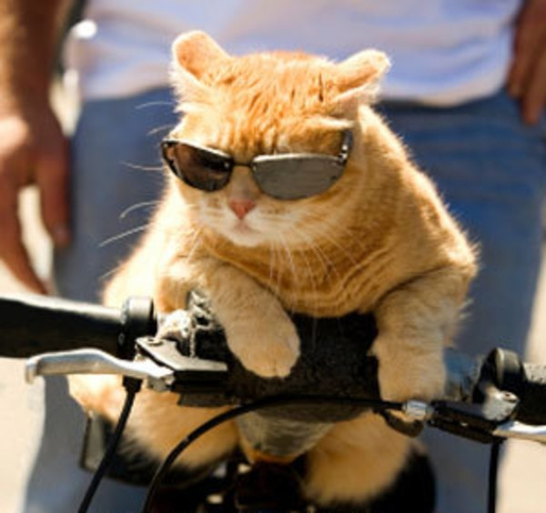 12 things you didnt know about your own cat 11