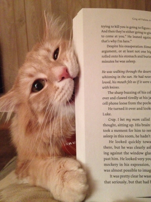 13 animals that are sure that your attention is missplaced 12