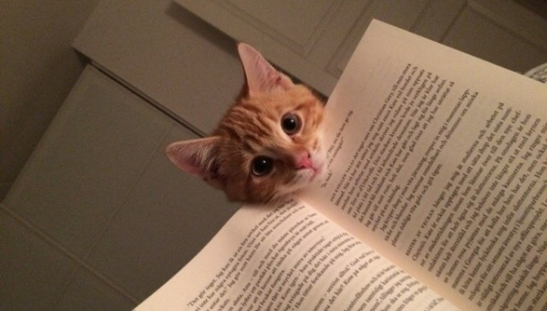 13 animals that are sure that your attention is missplaced 4
