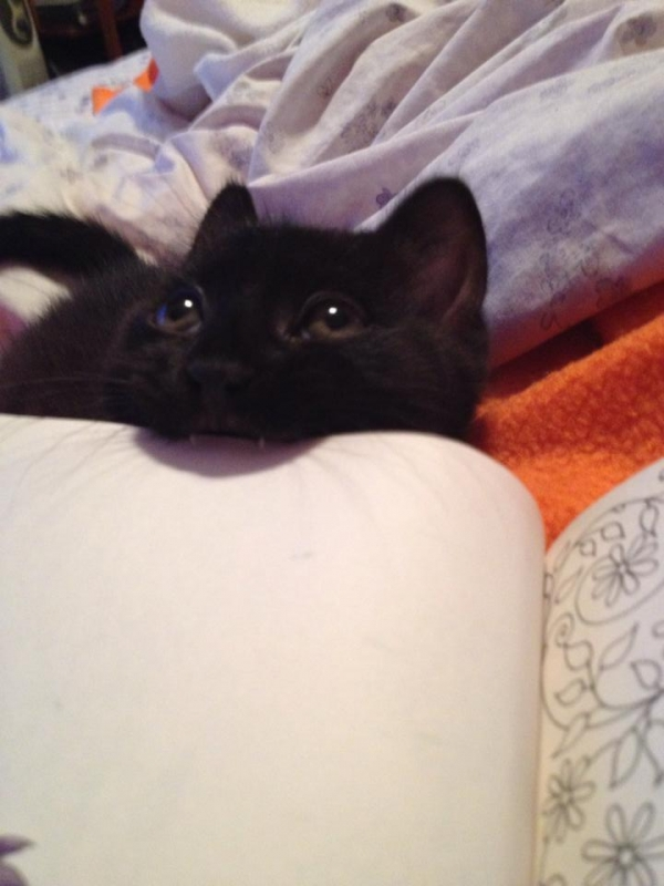 13 animals that are sure that your attention is missplaced 6