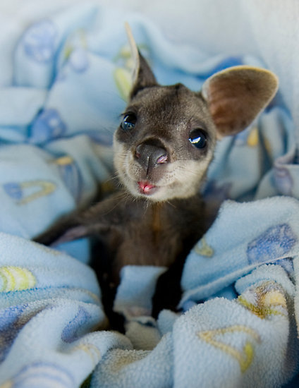 13 little beasts that will cute you out 8