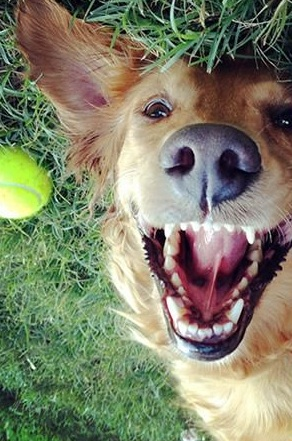 13 pets that are absolutely enjoying this moment 1 10