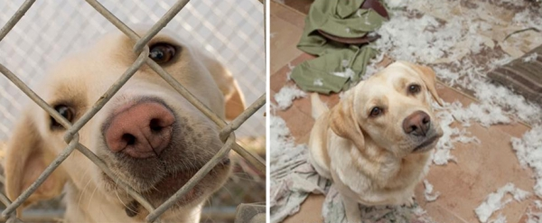 14 before and after pictures that will melt your hearth adopt dont shop 1
